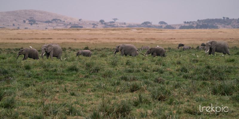 Marsh Walk