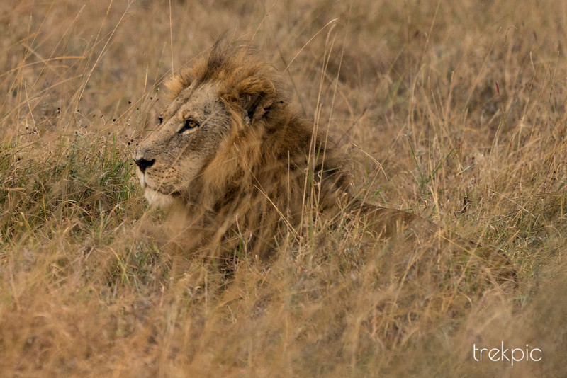 King of Nairobi