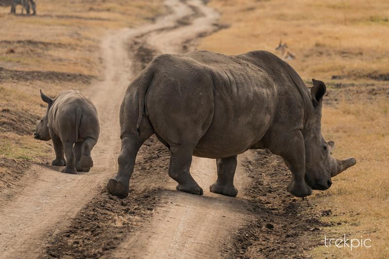 Rhino Bums