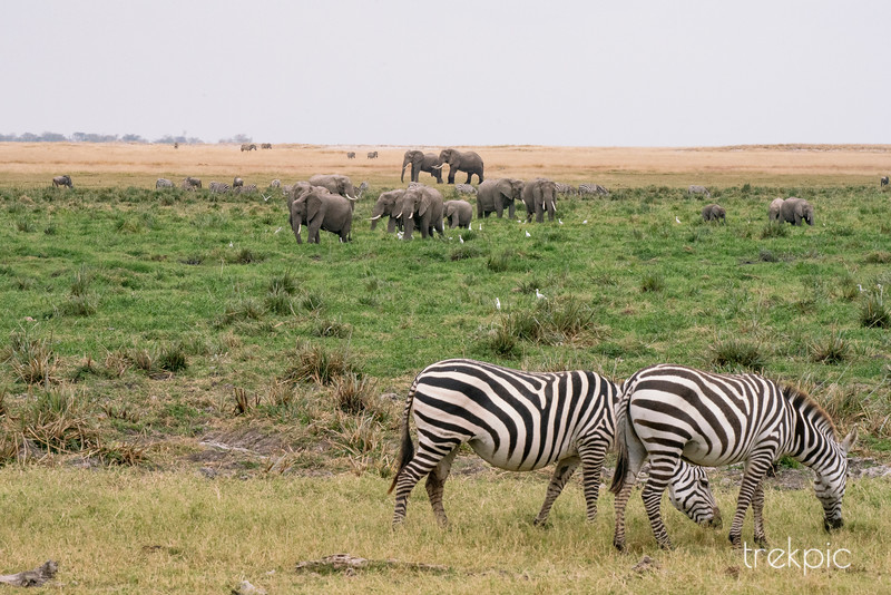 Zebraphant Vista