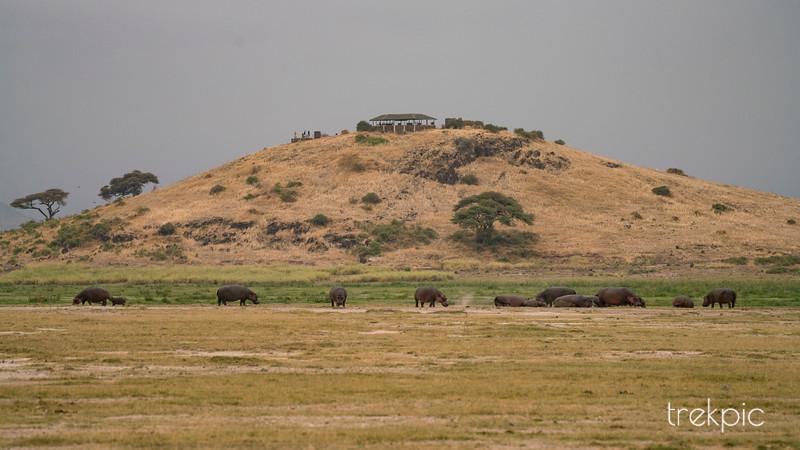 Hippo Hill