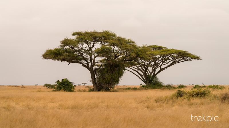 Road to Amboseli