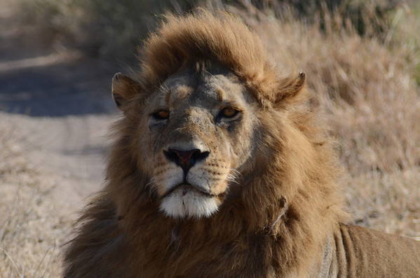 Safari Serengeti - June 28 to July 10, 2013