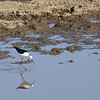 Bird with reflection - Serengeti