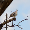 Bird in tree - Tarangire