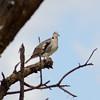 Bird in tree - Tarangire