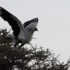 Secretary bird - Serengeti