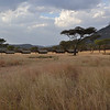 OAT Safari Tented Camp - Serengeti