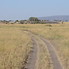 Serengeti landscape - Serengeti