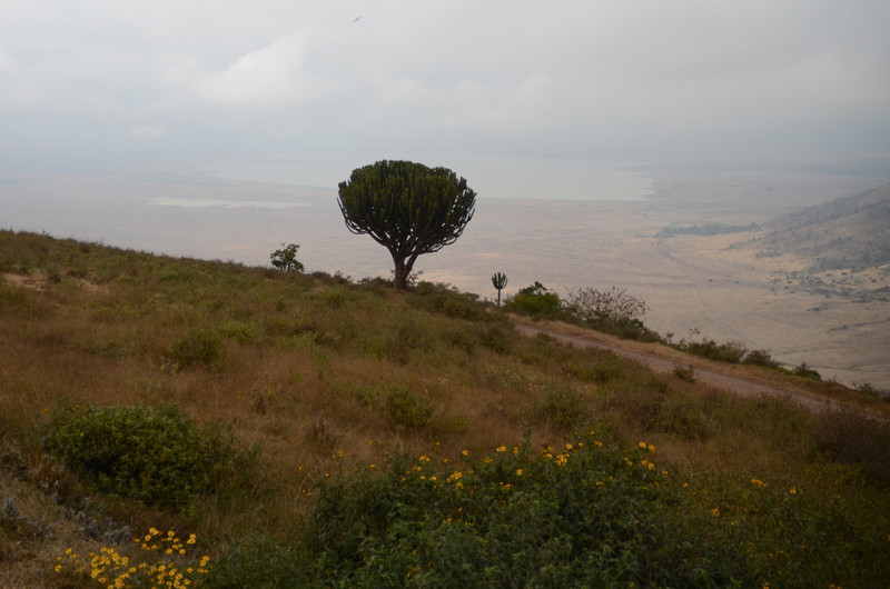 View into Ngorongoro Caldera