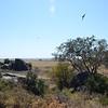 Serengeti landscape - Moru Kopjies, Serengeti