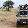 On safari - Tarangire