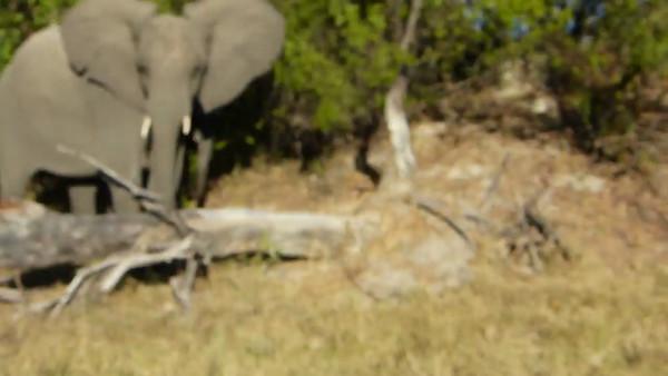 Kwara:  Irritated elephant & baby 0:26