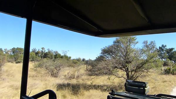 Sandibe: Game drive vehicle view 0:38