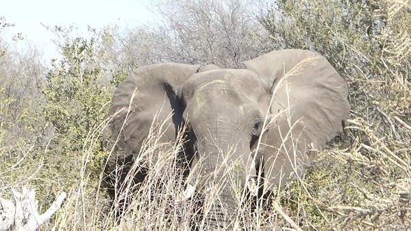 Elephant finds us boring...  0:16