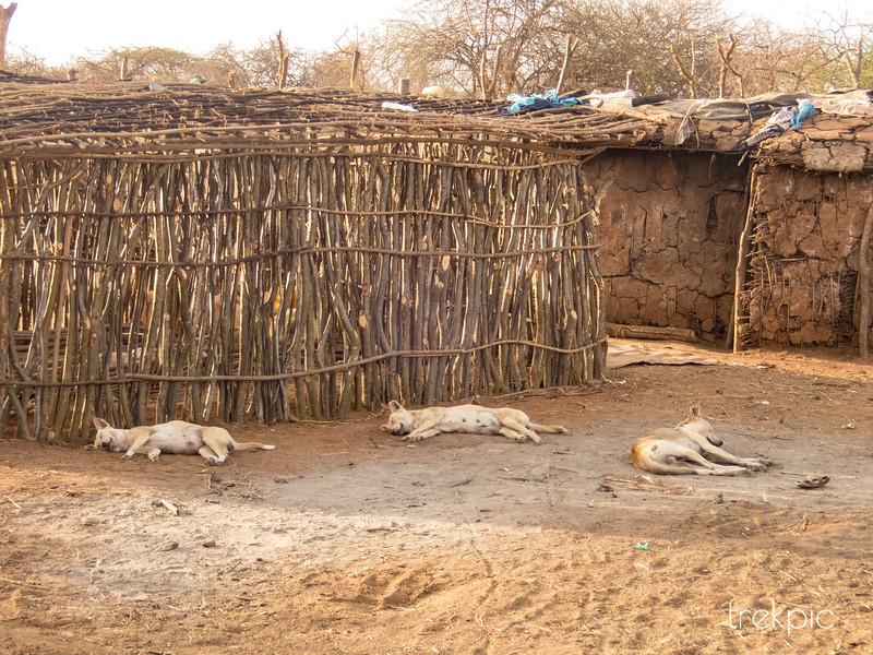 Maasai Siesta