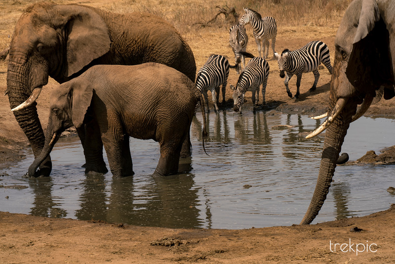 Company at the Waterhole