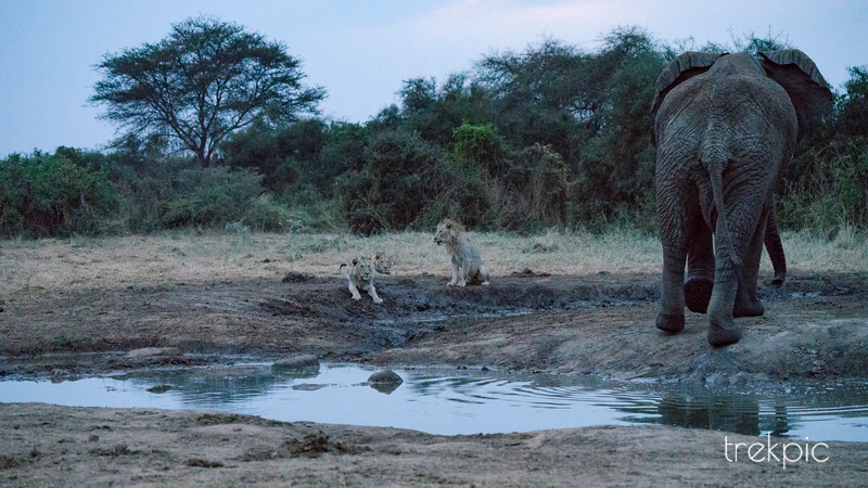 Waterhole Confrontation Series - 3 of 4