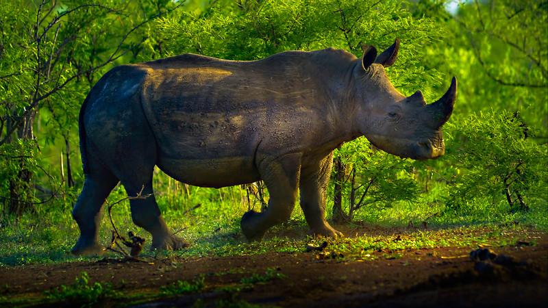 African Animals-56.jpg