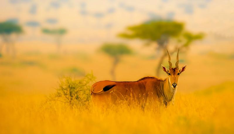 African Animals-30.jpg