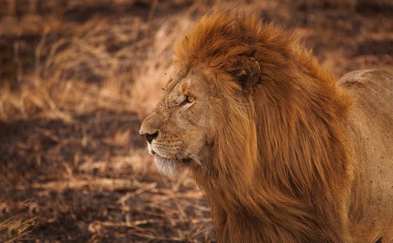 African Animals-50.jpg