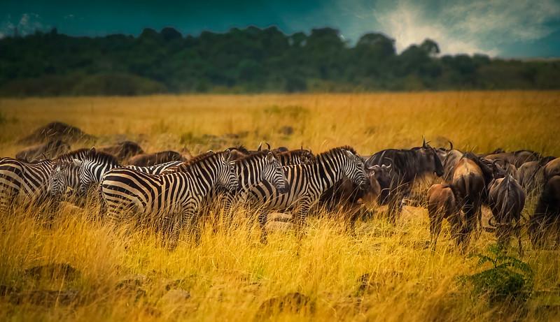 African Animals-71.jpg