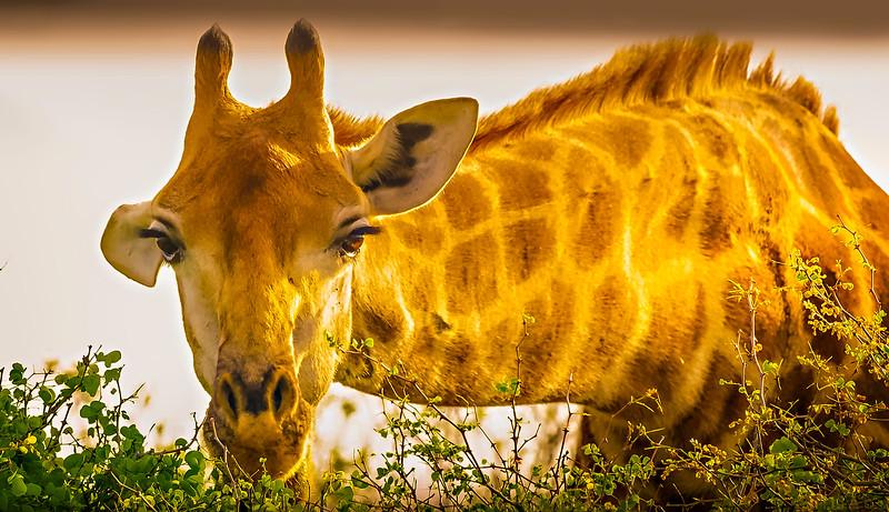 African Animals-12.jpg