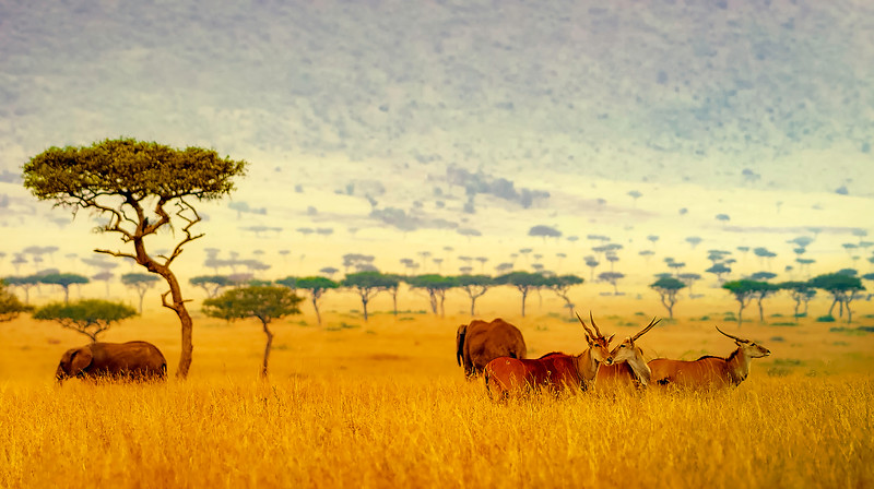 African Animals-31.jpg