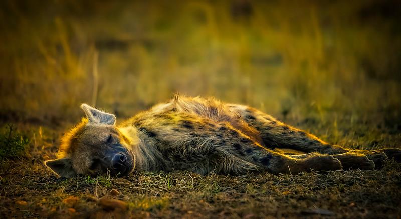 African Animals-18.jpg