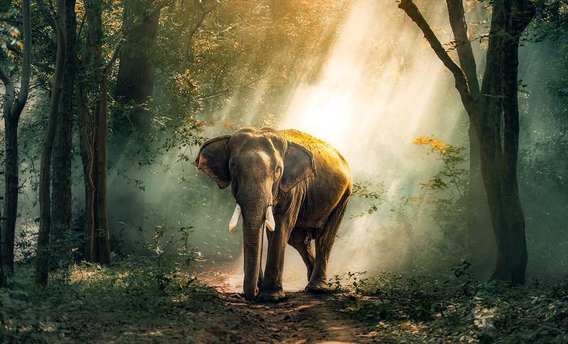 African Animals-49.jpg