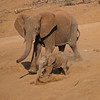 African bush elephant and baby