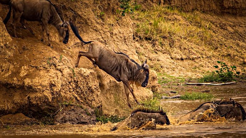 African Animals-84.jpg