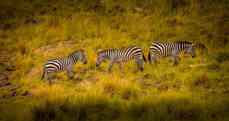 African Animals-69.jpg