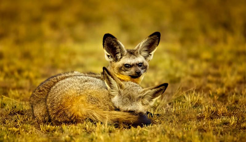 African Animals-21.jpg