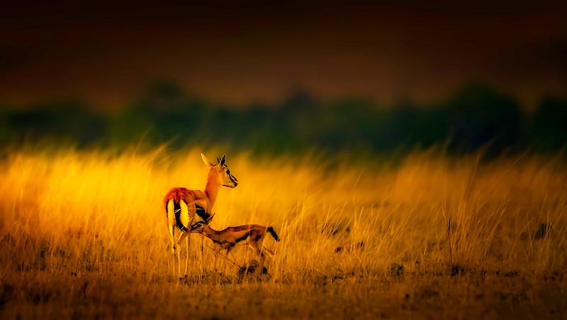 African Animals-20.jpg