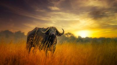 African Dreams.