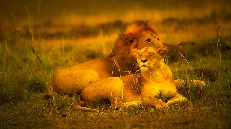 African Animals-60.jpg