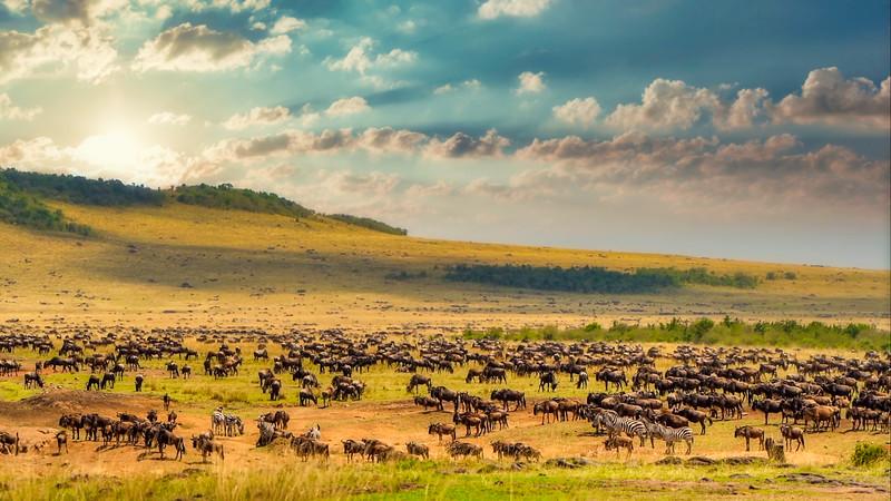 African Animals-85.jpg