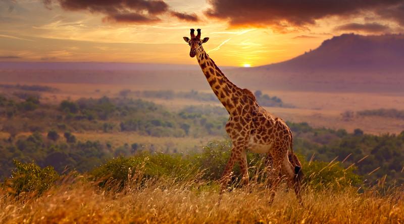 African Animals-62.jpg
