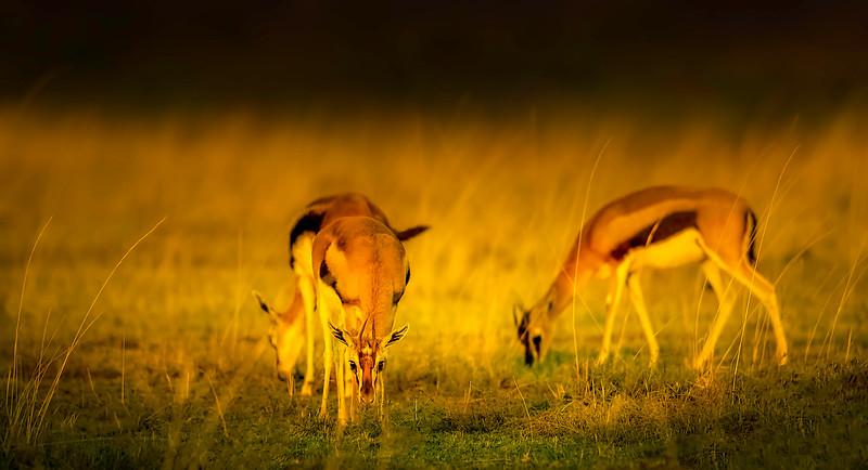 African Animals-22.jpg