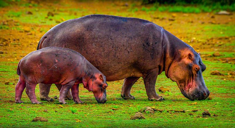 African Animals-7.jpg