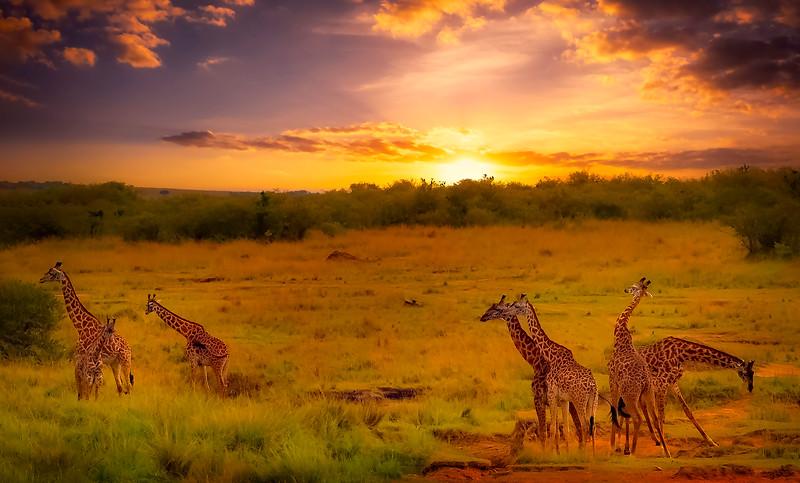African Animals-61.jpg