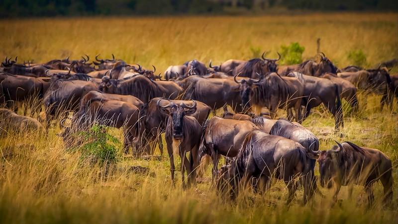 African Animals-73.jpg