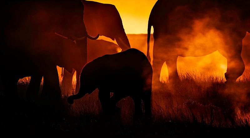 African Animals-6.jpg