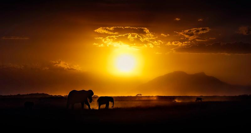 African Animals-2.jpg