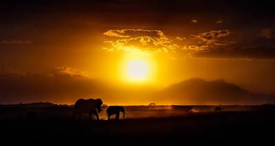 On Safari - African Dreams.