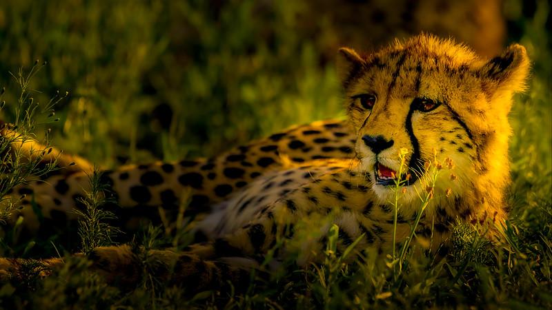 African Animals-57.jpg