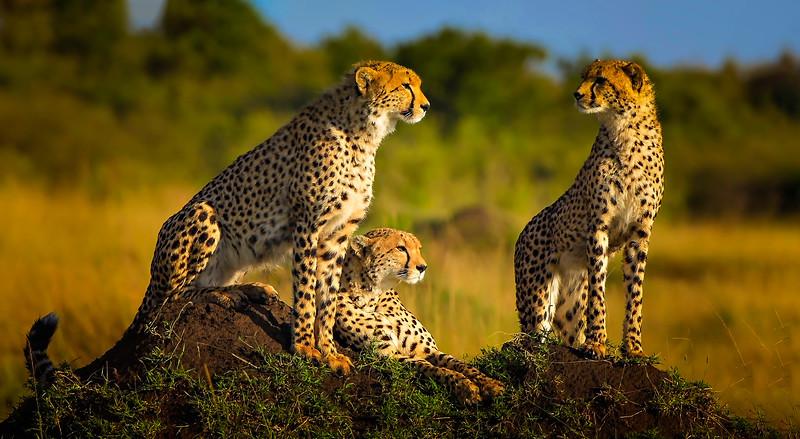 African Animals-58.jpg