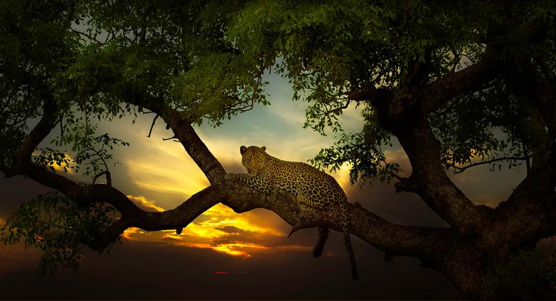 African Animals-33.jpg