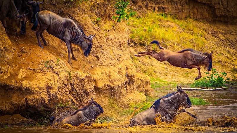African Animals-82.jpg